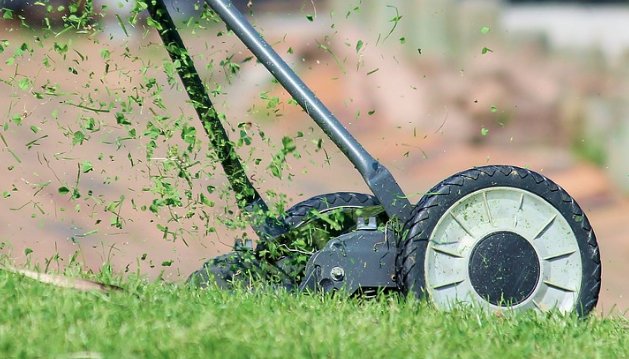The Principles Of Pest Control On Lawns And Turf
